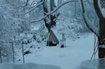 dawn view of my chicken coop
